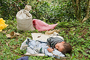 23 OCTOBER 2003 -- TAPACHULA, CHIAPAS, MEX: A baby sleeps while his mother harvests coffee on a finca (plantation) near Tapachula, Mexico. World coffee prices have been depressed by over production in Brazil and Vietnam and thousands of coffee farmers in Mexico and Guatemala have been forced to emigrate to the US as undocumented workers because of the crisis in the coffee industry. PHOTO BY JACK KURTZ