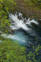 Tamolitch Falls, or Blue Pool, McKenzie River Oregon
