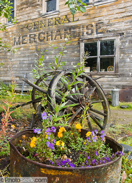"A flower bed and old wooden wheel rest by the old Watsjold Groceries & Meat building labeled ""GENERAL MERCHANDISE"" in historic McCarthy, Alaska, USA. McCarthy and nearby Kennecott Mines National Historic Landmark are nestled under the glacier-clad Wrangell Mountains within Wrangell-St. Elias National Park and Preserve. Old mine buildings, artifacts, and colorful history attract summer visitors. Remote McCarthy is connected to Chitina via the McCarthy Road spur of the Edgerton Highway. At the east end of McCarthy Road, visitors must park their vehicle and walk across the footbridge to McCarthy. From McCarthy, a privately-operated shuttle takes visitors 5 miles to Kennecott. After copper was discovered between the Kennicott Glacier and McCarthy Creek in 1900, the Kennecott town, mines, and Kennecott Mining Company were created and named after the adjacent glacier. Kennicott Glacier and River had previously been named after Robert Kennicott, a naturalist who explored in Alaska in the mid-1800s. The corporation and town stuck with a mistaken spelling of ""Kennecott"" with an e (instead of ""Kennicott"" with an i). Partly because alcoholic beverages and prostitution were forbidden in the company town of Kennecott, the neighboring town of McCarthy grew quickly to provide a bar, brothel, gymnasium, hospital, and school. The Copper River and Northwestern Railway reached McCarthy in 1911 to haul over 200 million dollars worth of ore 196 miles to the port of Cordova on Prince William Sound. By 1938, the worlds richest concentration of copper ore was mostly gone, the town was mostly abandoned, and railroad service ended. Not until the 1970s did the area began to draw young people for adventure and the big money of the Trans Alaska Pipeline project. Declaration of Wrangell-St. Elias National Park in 1980 drew adventurous tourists who helped revive McCarthy with demand for needed services. Wrangell-St. Elias National Park and Preserve is the largest National Park in the USA."