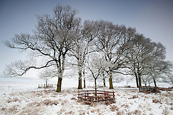 Trees in the snow and ice at Bradgate Country Park, Leicestershire, England, UK.