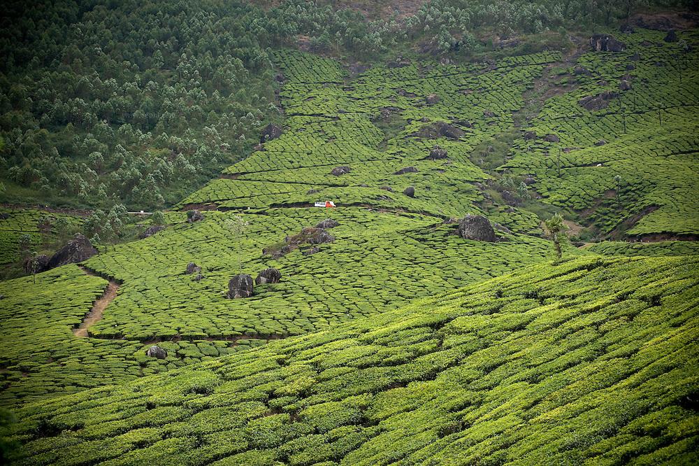 a truck going through the tea plantation near Munnar, Kerala
