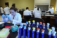 Rowan-Cabarrus Community College students participate in a genetics lab at RCCC's NC Research Campus location. They are isolating various food items in order to determine whether they contain genetically modified organisms.