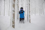 An alpine skier squeezes between aspen trees as he skies through fresh, powder snow, Steamboat Springs, Colorado.