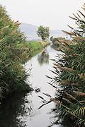 Israel, Hula Valley, Lake Agamon Bird sanctuary nature reserve