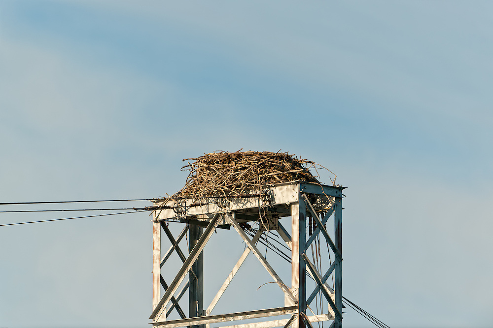 The Nest becomes the epicenter of the territory.
