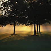 """Foggy Rays of Morning""<br />
