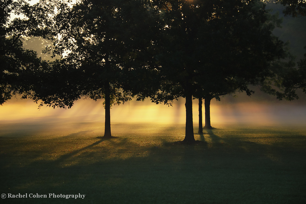 &quot;Foggy Rays of Morning&quot;<br />