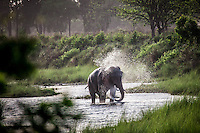 Elephant cools off under water in Bardia National Park, Nepal.