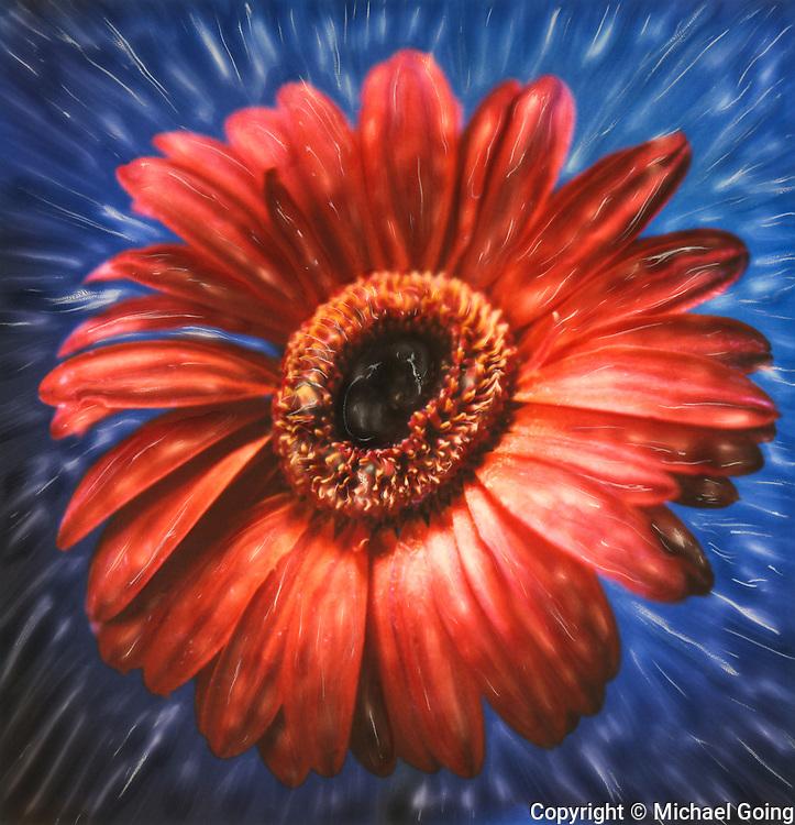 Altered Polaroid close up of orange Daisy against blue background
