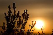 Conceicao do Mato Dentro_MG, Brasil.<br /> <br /> Parque Nacional Serra do Cipo, Minas Gerais.<br /> <br /> Serra do Cipo National Park, Minas Gerais.<br /> <br /> Foto: MARCUS DESIMONI / NITRO