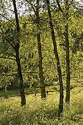 Oxfordshire landscape, Swinbrook, England, United Kingdom