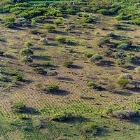 Les Grands Fonds accueillent une agriculture variée et intensive ainsi que de l'élevage de bétail.