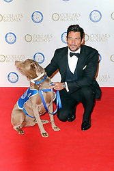 © Licensed to London News Pictures. 07/11/2013.  David Gandy at the Battersea Dogs & Cats Home Collars & Coats Gala Ball at Battersea Evolution, London UK. Photo credit: by Richard Goldschmidt/LNP