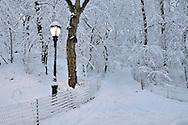 Light on Central Park