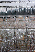 Weather: Spring ice storm coats a fence and weeds in rural Tennessee. March 1974.