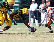 Junior linebacker Hasan Craig of Norfolk State picks up this Florida A&M fumble during their 17 - 13 loss at Dick Price Stadium on the campus of Norfolk State University in Norfolk, Virginia.  (Photo by Mark W. Sutton)