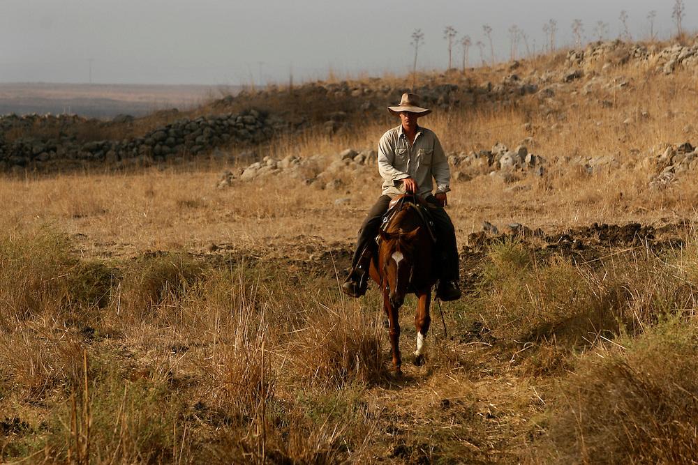 Yehuda Gilad 27 gathering the cattle for veterinary checks in Moshav Yehonatan in the Golan height, Israel...Tuesday October, 07, 2007..