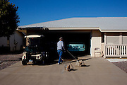 Herb Dummer, originally of Wisconsin, walks his dogs Dewy and Serena to his garage at 9510 Hidden Valley Circle in Sun City, Arizona March 12, 2010. 2010 marks the 50th anniversary of Sun City, the first planned retirement city in the United States.