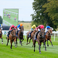 Newmarket 17th August