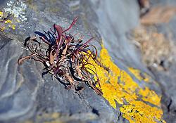 Lichen, Portland Maine
