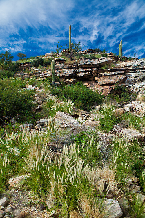 The plant life on Mt. Lemmon, near Tucson, Arizona gives tourists a range of Sagauro cactus at the bottom of the climb, to Coniferous trees, and rocky outcrops near the 10,000 foot peak.