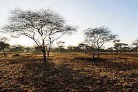 Open savanah woodland at dawn, Mkhaya Game Reserve, Swaziland