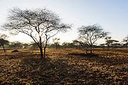 Open savanah woodland at dawn, Mkhaya Game Reserve, Swaziland
