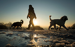 © Licensed to London News Pictures. 12/12/2017. London, UK. A woman walks her dogs in freezing conditions on Hampstead Heath in north London on a bright, sunny morning. Temperatures across the the UK dipped overnight with some regions expected to drop to -13C (9F). Photo credit: Ben Cawthra/LNP