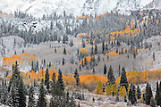 Frosted Trees in the Maroon Valley outside of Aspen, Colorado.