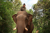 Laos: Saving the Elephants of Laos