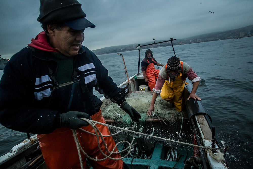 VALPARAISO, CHILE - MARCH 18, 2014: Artisanal fishermen  pull up nets of Southern hake fish (Merluccius australis) off the coast of Valparaiso, Chile. Hake stocks have suffered in Chile, and the government is working to regulate the fishing industry in effort to make it more sustainable. PHOTO: Meridith Kohut for The World Wildlife Fund