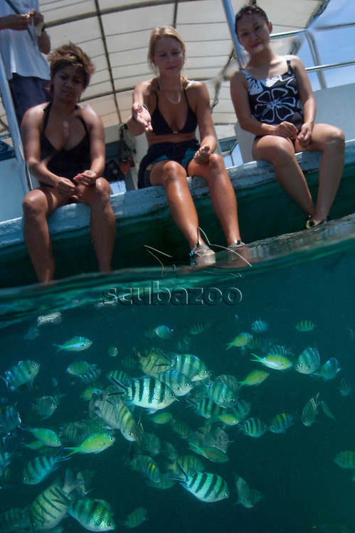 Split shot of tourists sitting on pontoon, looking at schools of Damselfishes, front view, Sapi Island, Sabah, Malaysia