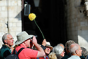 Tour guide holding plastic chrysanthemum flower so her group can find her. Dubrovnik old town, Croatia