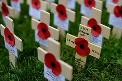 © Licensed to London News Pictures.07/11/2013. London, UK.A Cross of Remembrance laid to remember Lily Strugnell the country's oldest war widow who died last month at the age of 109.Photo credit : Peter Kollanyi/LNP