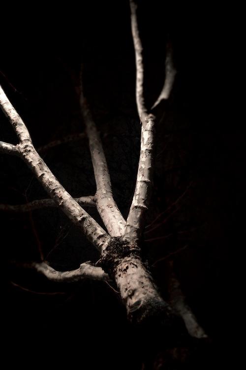 trees at night, london, england, united kingdom