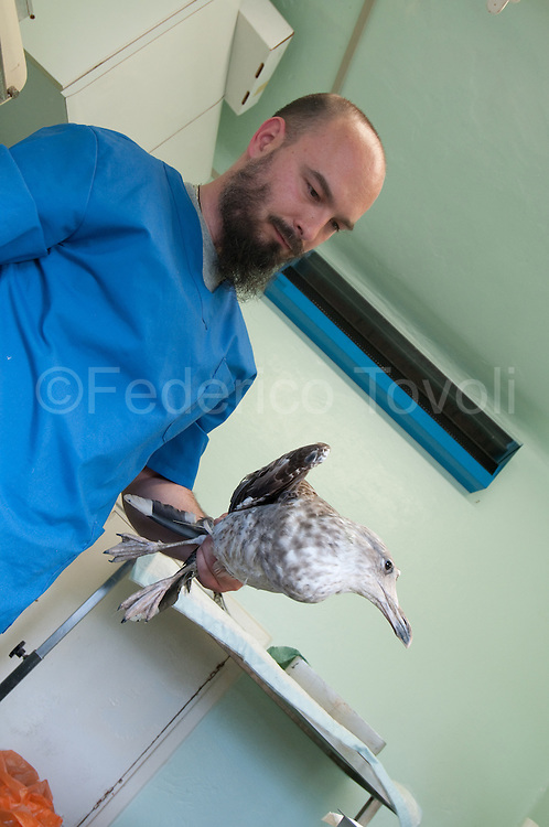 Doctor Renato Ceccherelli doing an intervention called  limping on a seagull