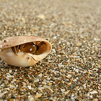 EN&gt; A hermit crab sheltered in its shell in a beach in Guanacaste, Costa Rica | <br />