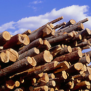 Freshly cut logs near a sawmill in Maine, USA