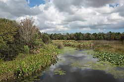 beautiful view of Green Cay National Wildlife Refuge