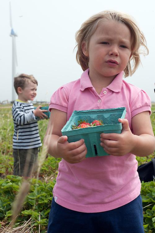 Bridget's Strawberries, Nantucket, Massachusetts, 2013