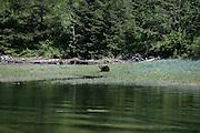 Brown Bear, Alaska<br />