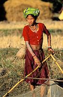 Nepal - Region du Teraï - Ethnie Tharu  - Pêcheurs des rizières