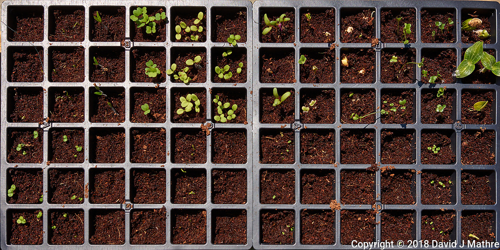 Seedlings (Day 5). Image taken with a Leica CL camera and 23 mm f/2 lens.