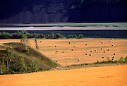 Wheat Fields in Peace River Country