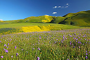 Velvet Green Grass Rolling Hills of Central California