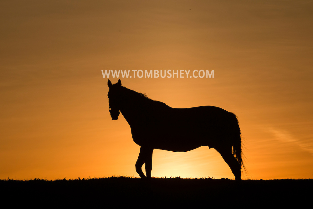 A thoroughbred mare stands in a field at Hidden Lake Farm in Otisville, New York.