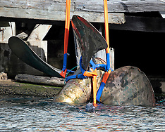Picton-Aratere's lost prop recovered and returned to shore