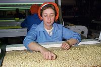 Women sorting peanuts, KP nuts Rotherham
