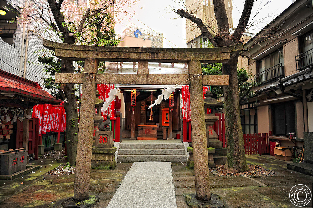 This image was taken through the Torii gate at a small hidden away Shinto Shrine in Tokyo. The shrine is tucked away between large buildings and has only 2 Cherry blossom trees.