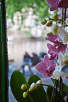 Amsterdam, Holland. An orchid placed in a window overlooking a canal.
